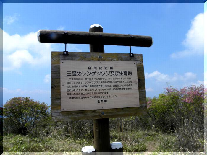 三窪高原のレンゲツツジ_c0073016_19472854.jpg