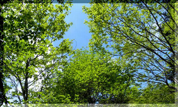 三窪高原のレンゲツツジ_c0073016_2033927.jpg
