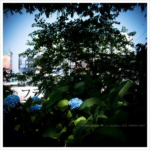 晴れた日のSHIBUYA…_e0117517_1820747.jpg