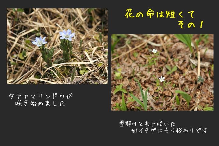 d0012134_1659233.jpg