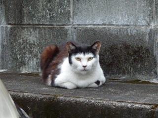 そと猫のお友だち 松田翔太くん編。_a0143140_23303912.jpg