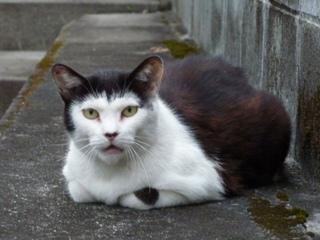 そと猫のお友だち 松田翔太くん編。_a0143140_2332582.jpg