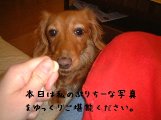 c0034743_1115016.jpg