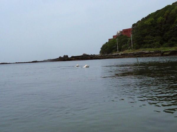 前々から約束ちてた海遊び♪〜_c0110361_16265398.jpg