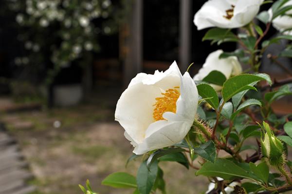 花の名は?_f0234062_2281344.jpg