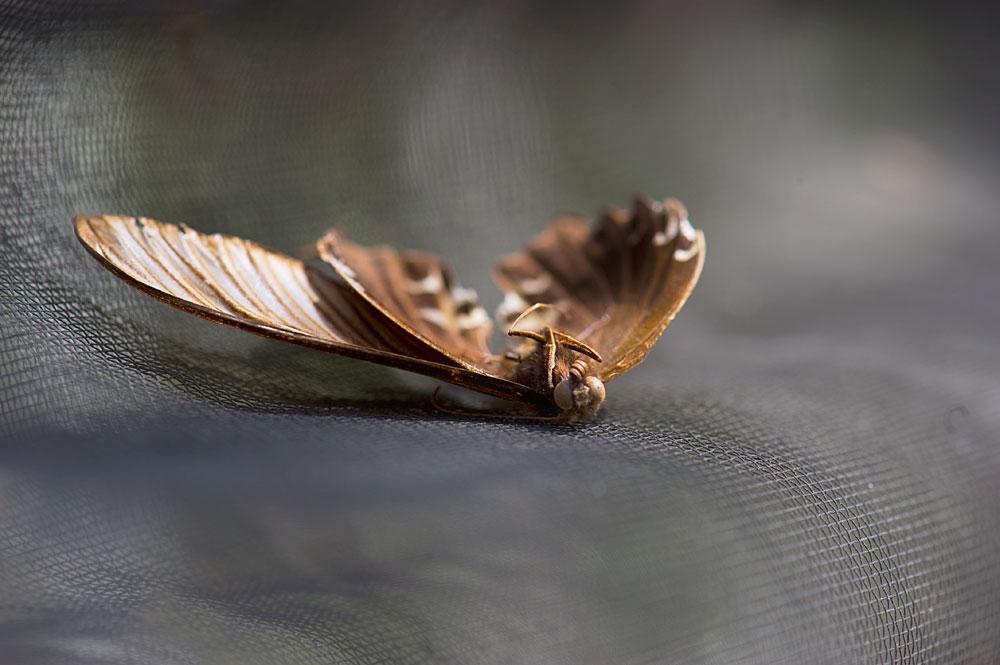 私設昆虫記-31 生と死の差分_f0215695_13544890.jpg