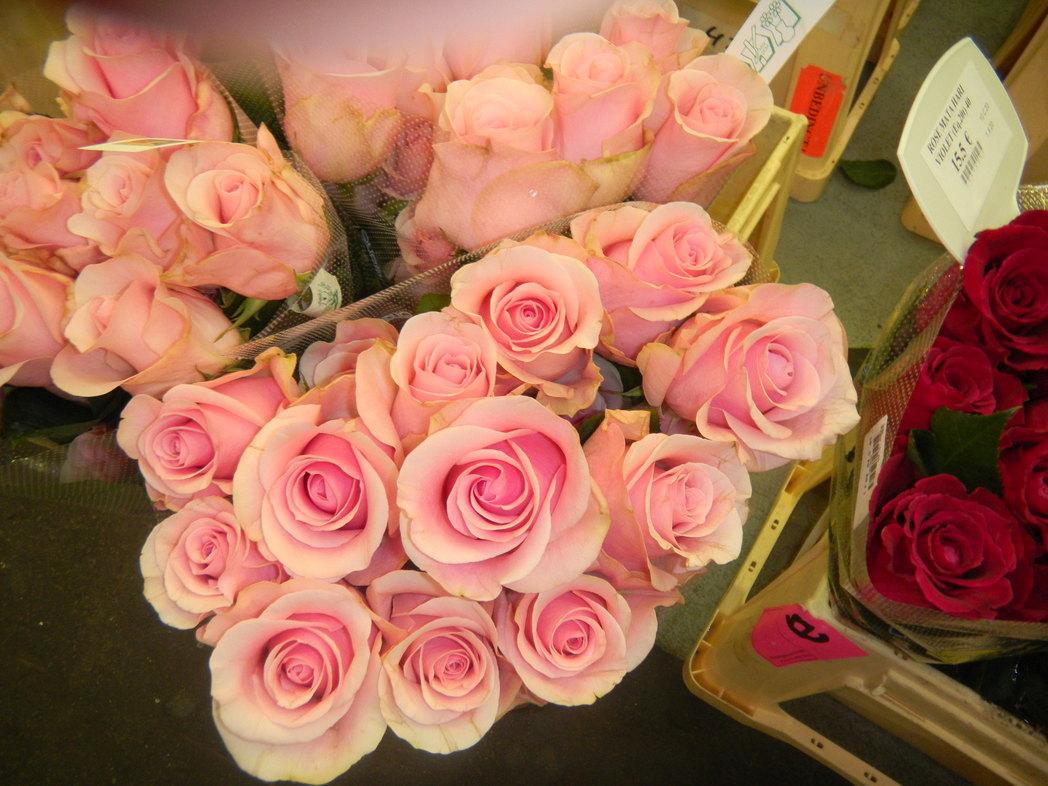 パリ お花市場 「 ランジス 」_c0195496_22124538.jpg