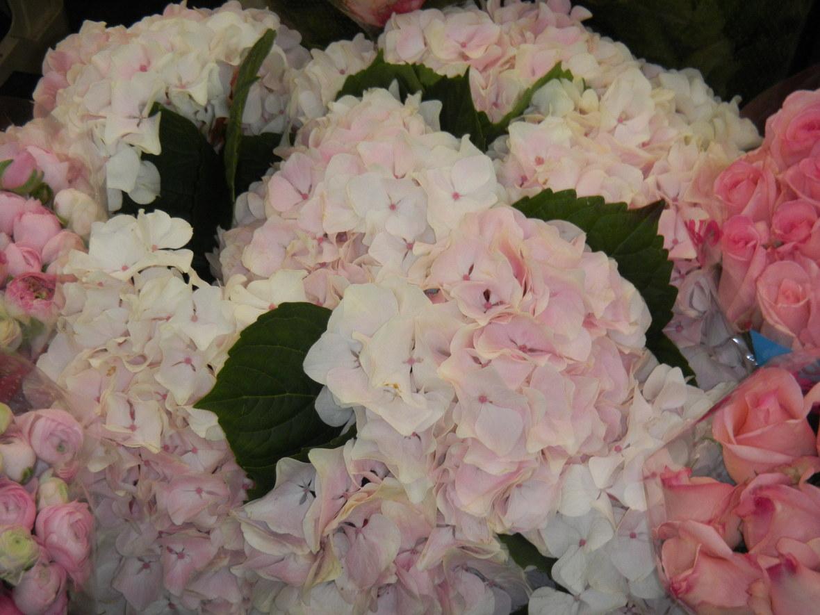 パリ お花市場 「 ランジス 」_c0195496_2245171.jpg