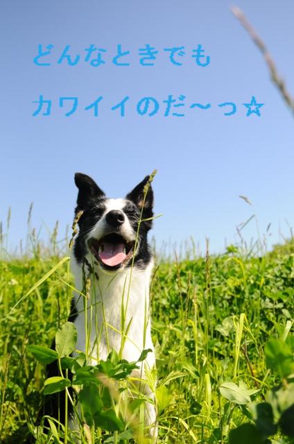 b0119620_16454974.jpg