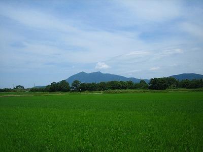 今日の筑波山と月桂樹_b0100229_1354064.jpg