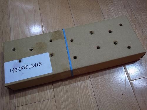 45H お手軽(手抜き)水槽_e0149241_23422581.jpg