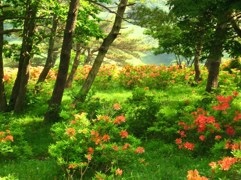 緑×オレンジ_d0001843_2031222.jpg