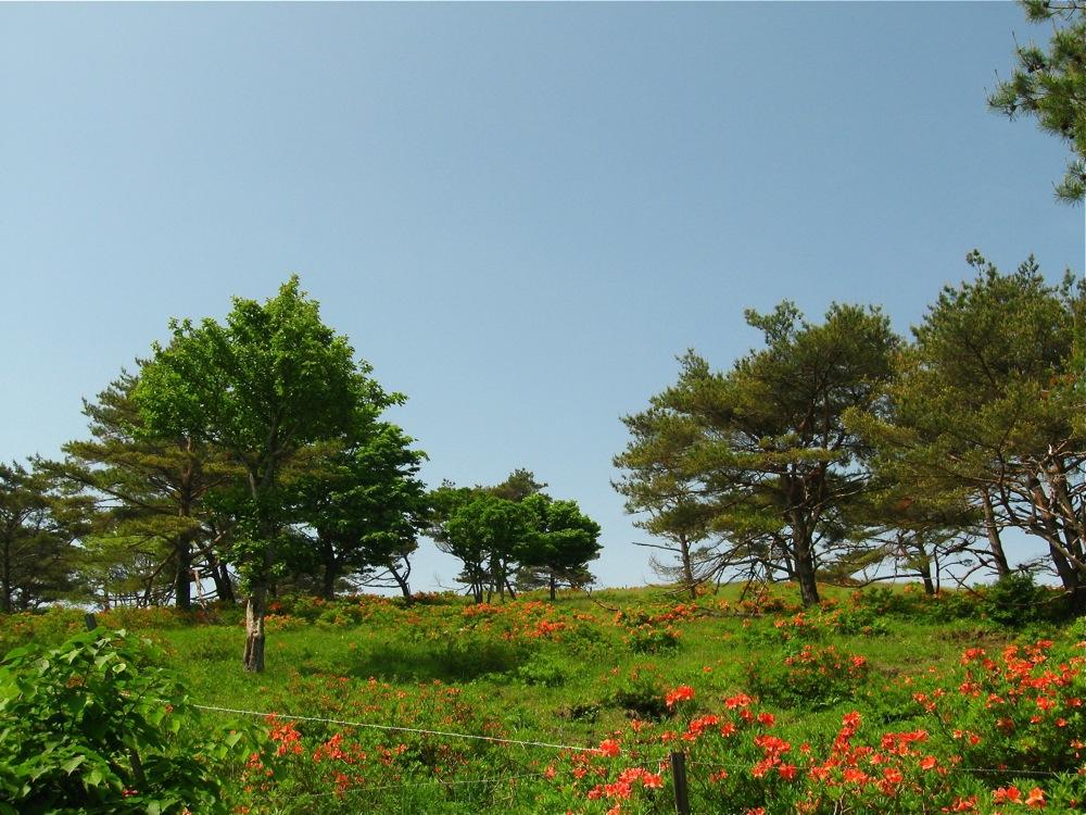 緑×オレンジ_d0001843_20323372.jpg