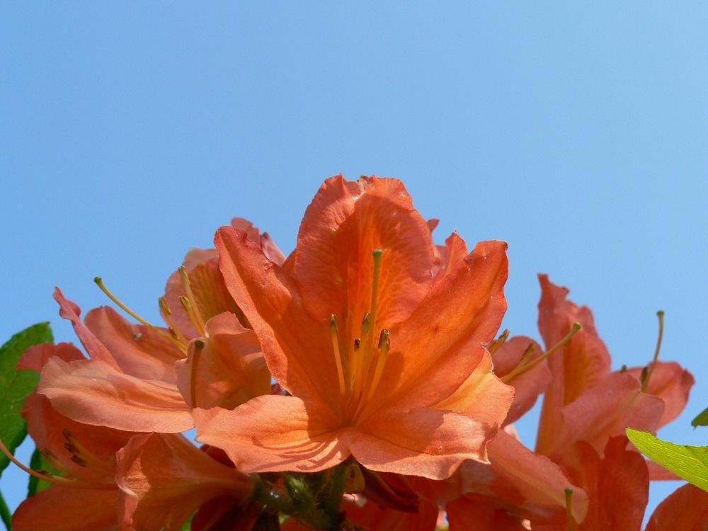 緑×オレンジ_d0001843_20534460.jpg