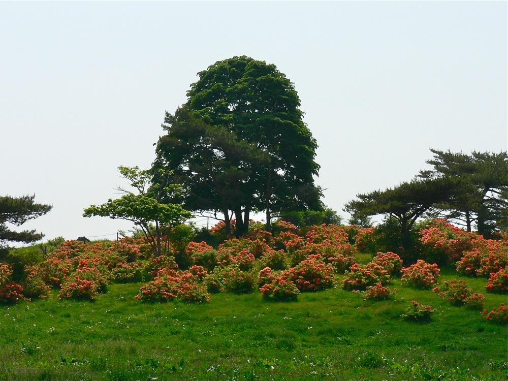 緑×オレンジ_d0001843_20553025.jpg