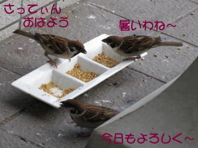 b0158061_16355610.jpg