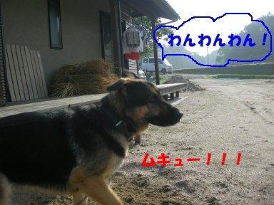 b0113663_973844.jpg