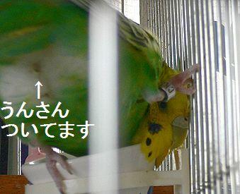 f0196665_041325.jpg