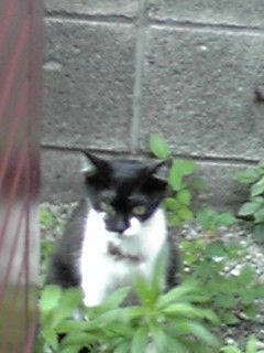 町田市猫虐待…預かりさん、里親さん、ご支援のお願い_c0167175_2155456.jpg