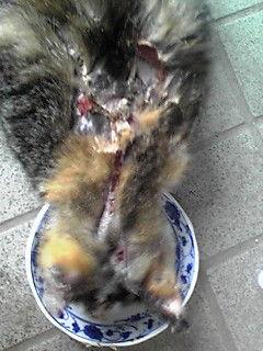 町田市猫虐待…預かりさん、里親さん、ご支援のお願い_c0167175_2162176.jpg