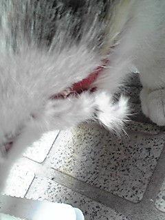 町田市猫虐待…預かりさん、里親さん、ご支援のお願い_c0167175_216502.jpg