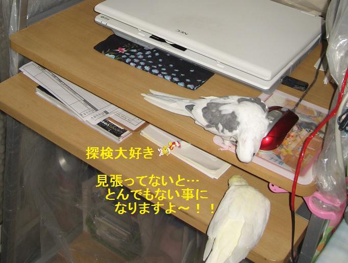 e0027078_752040.jpg