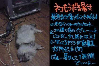 b0040309_1415616.jpg