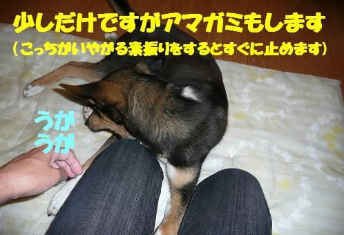 f0121712_1804681.jpg