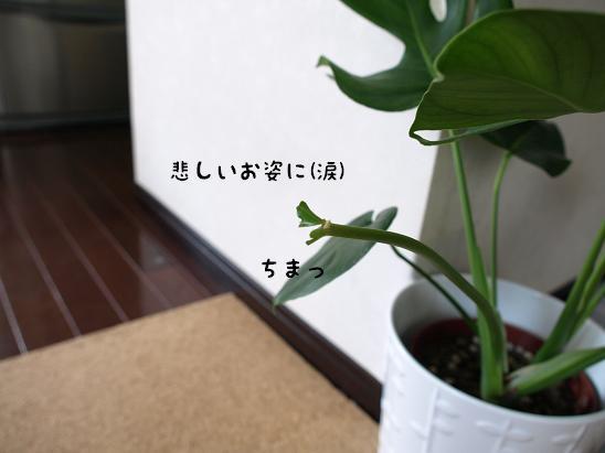 f0133316_13485469.jpg