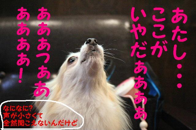 b0130018_935489.jpg
