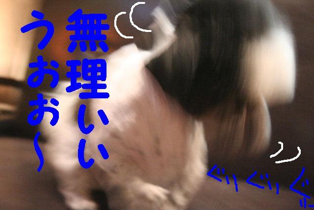 b0130018_9363661.jpg