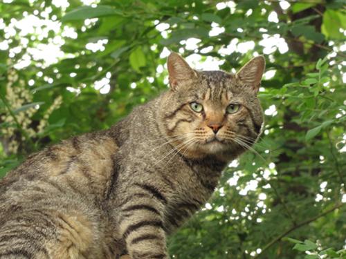 今日の外猫さん_b0105719_10152932.jpg