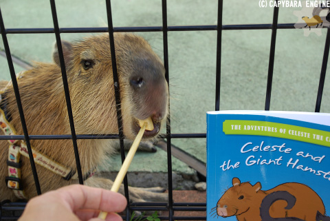How (not) to be reading capybara_f0138828_19584343.jpg