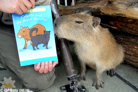 How (not) to be reading capybara_f0138828_19593372.jpg
