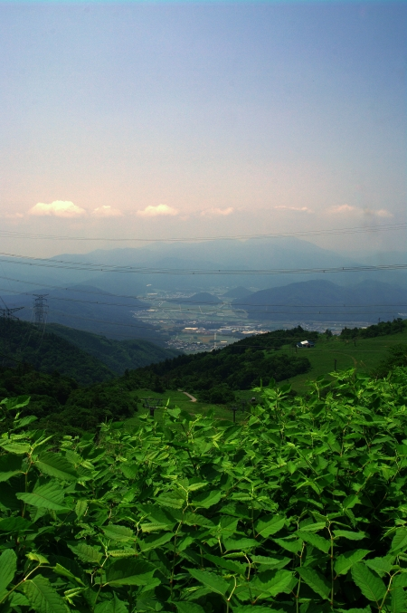 初夏の伊吹山 お花畑にて~♪_d0145934_20185372.jpg