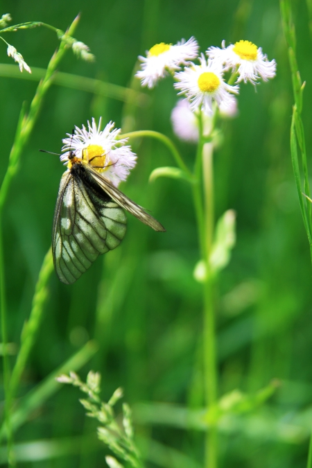 初夏の伊吹山 お花畑にて~♪_d0145934_20194157.jpg