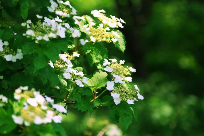初夏の伊吹山 お花畑にて~♪_d0145934_20203334.jpg