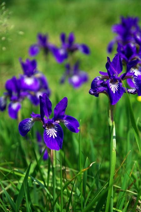 初夏の伊吹山 お花畑にて~♪_d0145934_20232612.jpg
