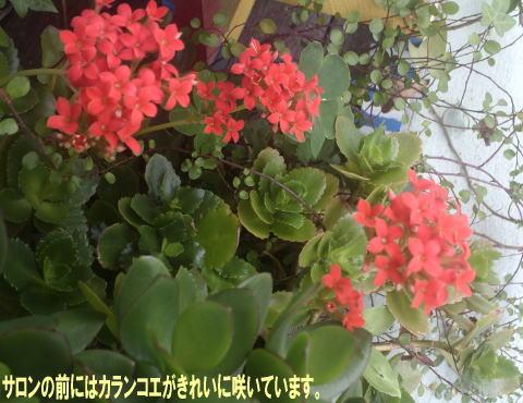 今日の茶ろん_c0113948_2221279.jpg