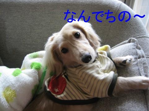 b0160052_1555517.jpg