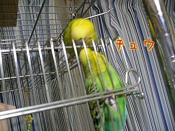 f0196665_2341158.jpg