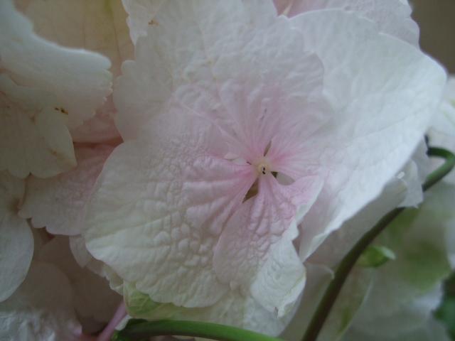オークリーフ(大輪紫陽花とクレマチスのアレンジメント、シノワな器に)_f0049672_12533741.jpg