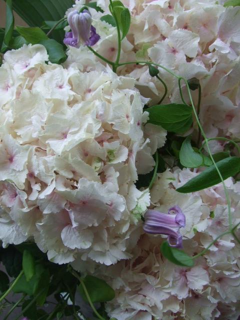 オークリーフ(大輪紫陽花とクレマチスのアレンジメント、シノワな器に)_f0049672_1253462.jpg