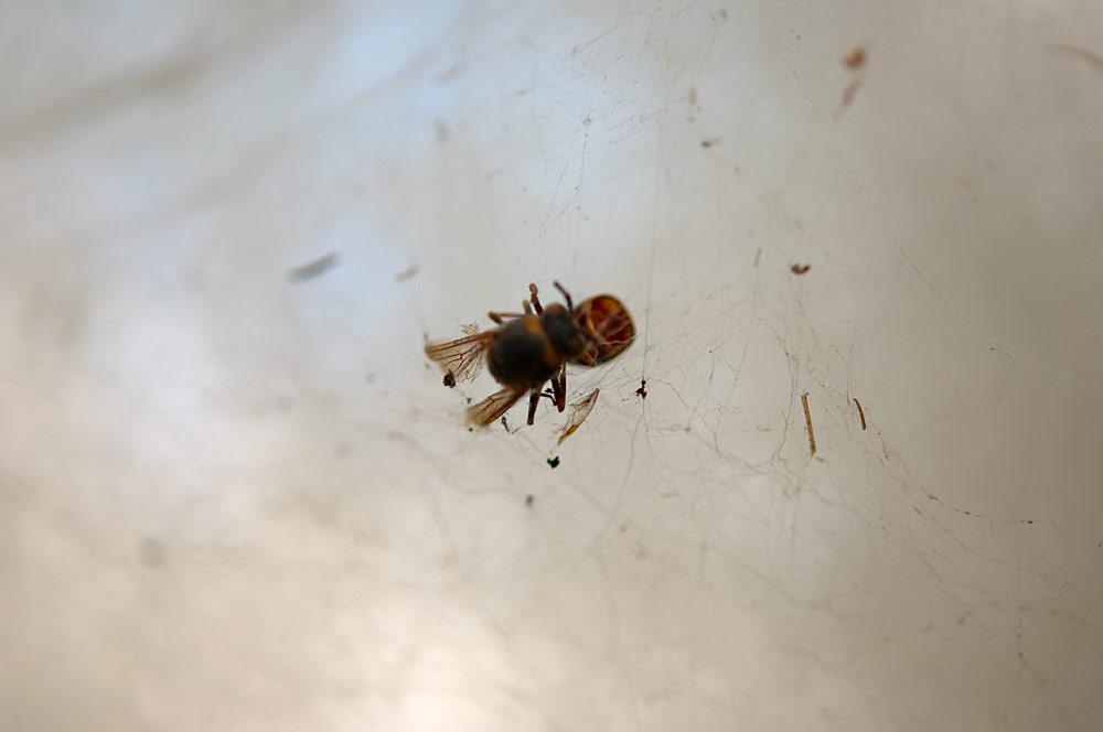 私設昆虫記-32 生と死の差分_f0215695_18241957.jpg