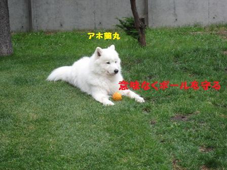 f0212597_1175364.jpg