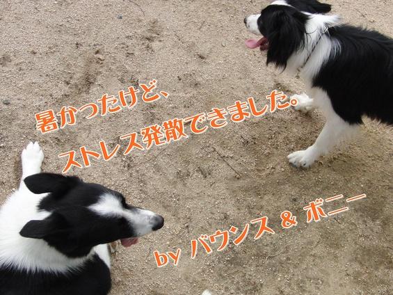 e0179321_19434912.jpg