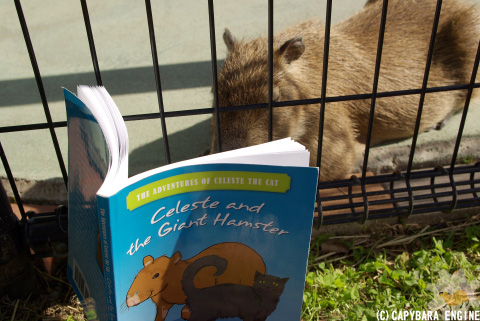 How (not) to be reading capybara_f0138828_0523139.jpg