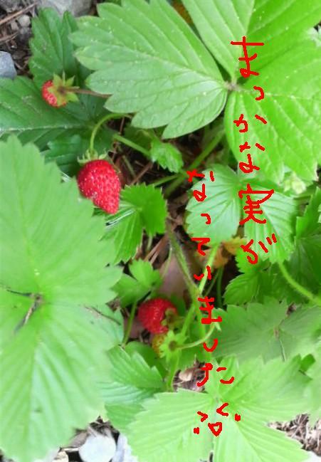 b0123736_14103980.jpg