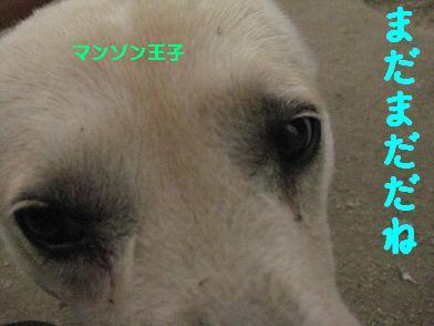 b0151748_111785.jpg