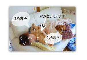 b0112758_191480.jpg